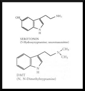 serotoninDMT