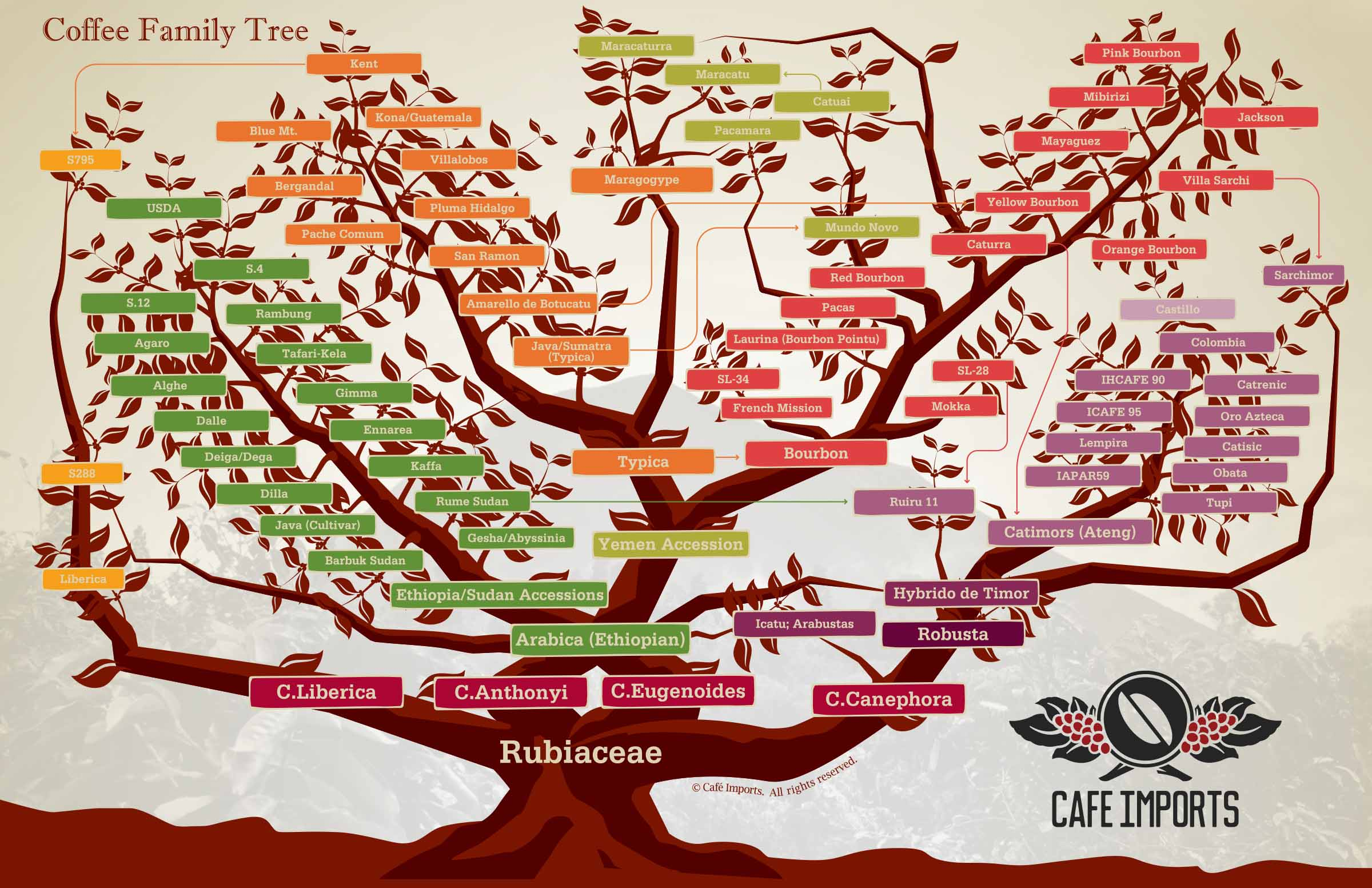 Coffee_Family_Tree_2015