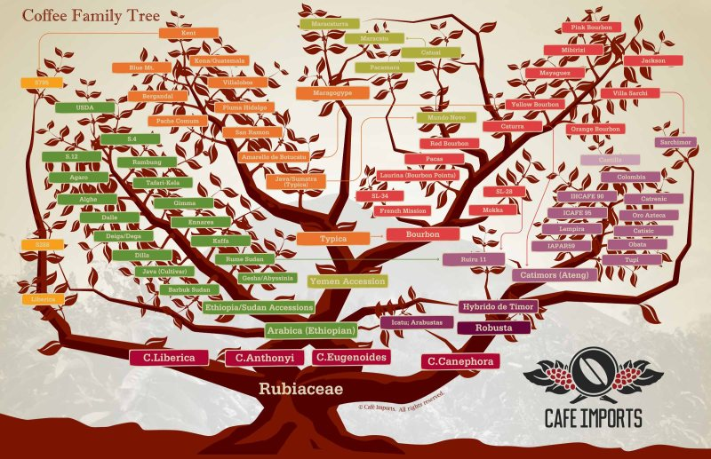 Coffee_Family_Tree_2015